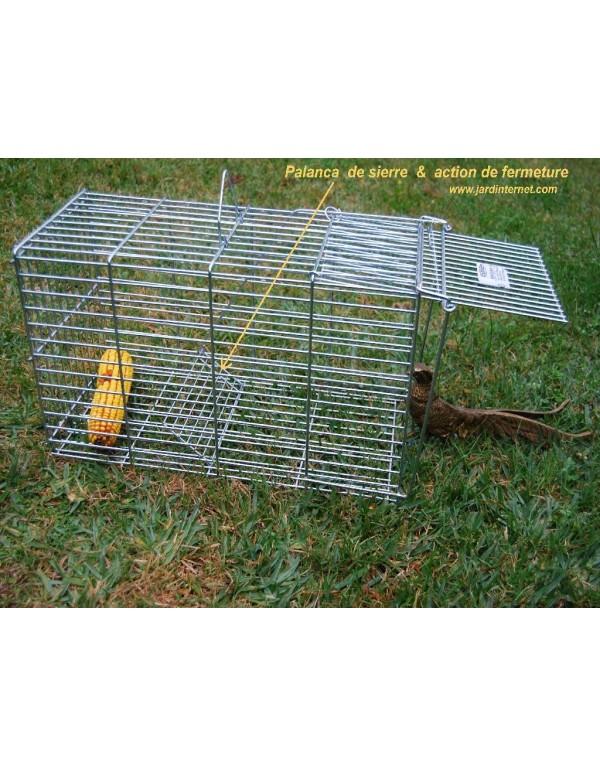 Mammal trap